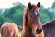 Чоловік вкрав із ферми коня
