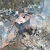 На Львівщині помер страшною смертю неповнолітній закарпатець