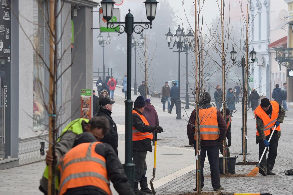 На площі Шандора Петефі в Ужгороді висадили амброві дерева