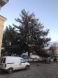 Новорічна ялинка у Сваляві шокувала усю Україну
