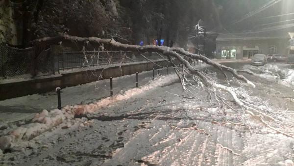 Негода наробила біди на Тячівщині