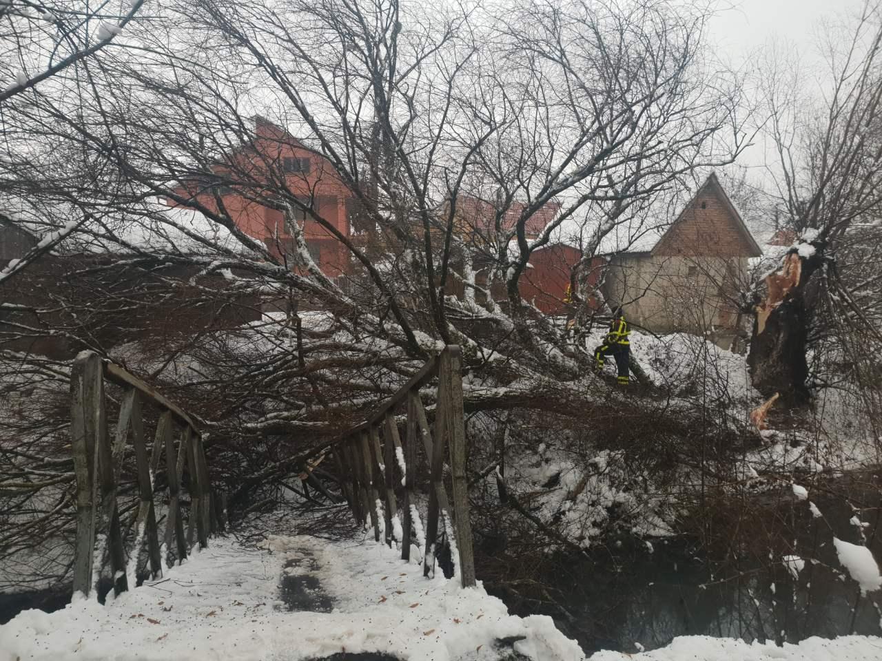 Наслідки негоди у Хусті: дерево зруйнувало міст