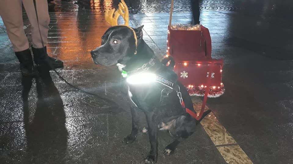 В Ужгороді замість оленів новорічна собака катає дітей на санях на колесах