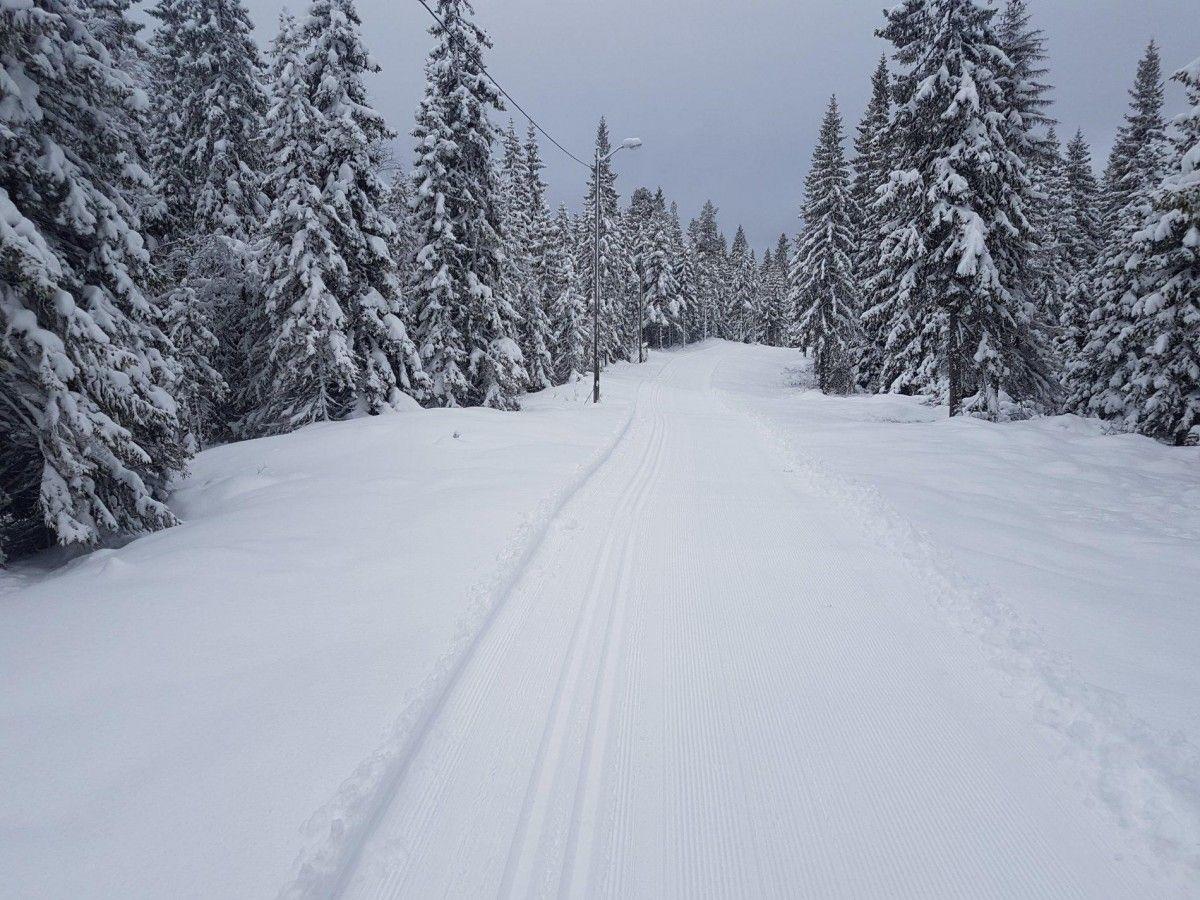 На Мукачівщині та Іршавщині внаслідок сильних снігопадів падали дерева