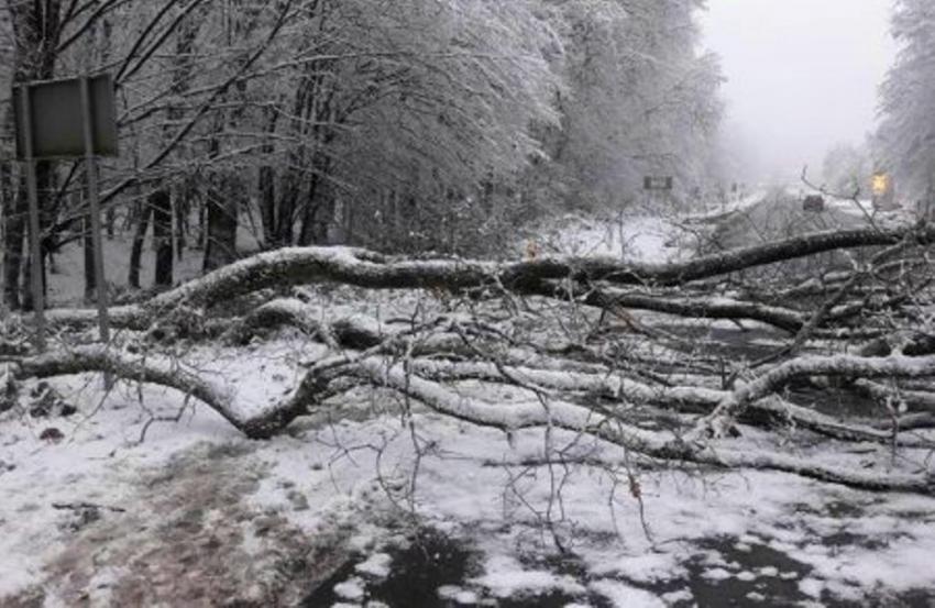Через деревопад на Закарпатті 35 сіл залишились без світла