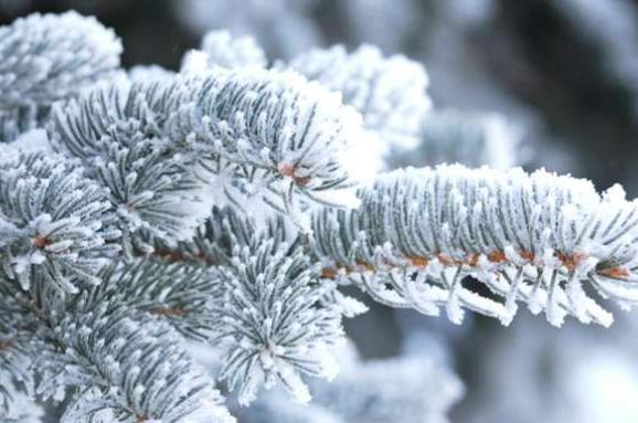 Синоптики розповіли, якою буде погода на Різдво в Закарпатській області