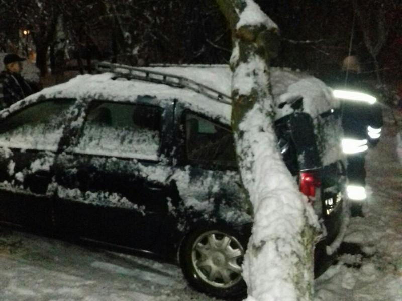 В Ужгороді дерево впало на автомобіль Dacia Logan