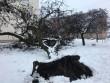 У Мукачеві величезне дерево впало на дитячий майданчик