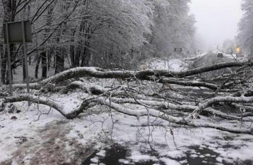 Деревопад на Закарпатті: 14 січня негода наробила біди