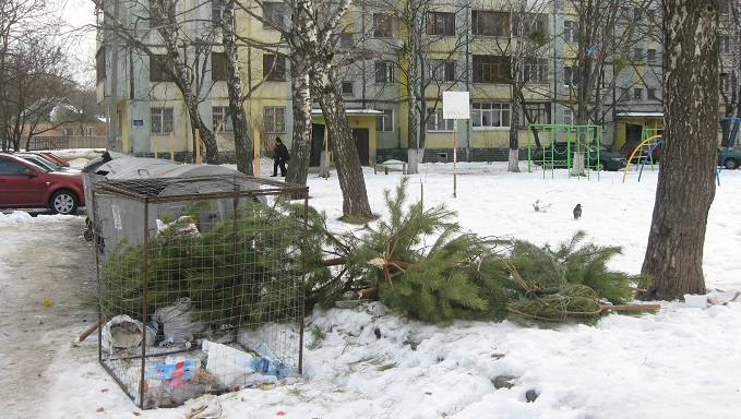 Мукачівцям розповіли, куди приносити новорічне дерево: перелік адрес