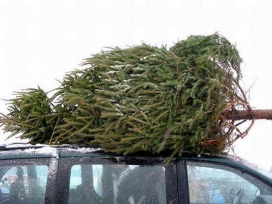 Підсумки новорічних свят: озвучено кількість людей, яких впіймали на крадіжках ялинок