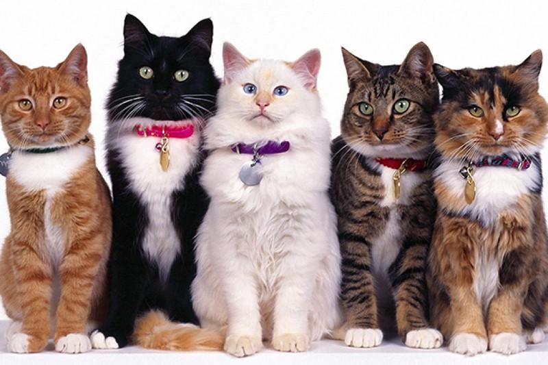 На Міжгірщині більше сотні котів живуть під одним дахом