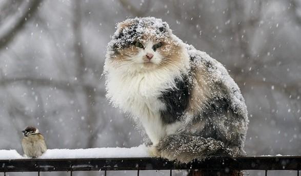 Прогноз погоди на 11 лютого на Закарпатті