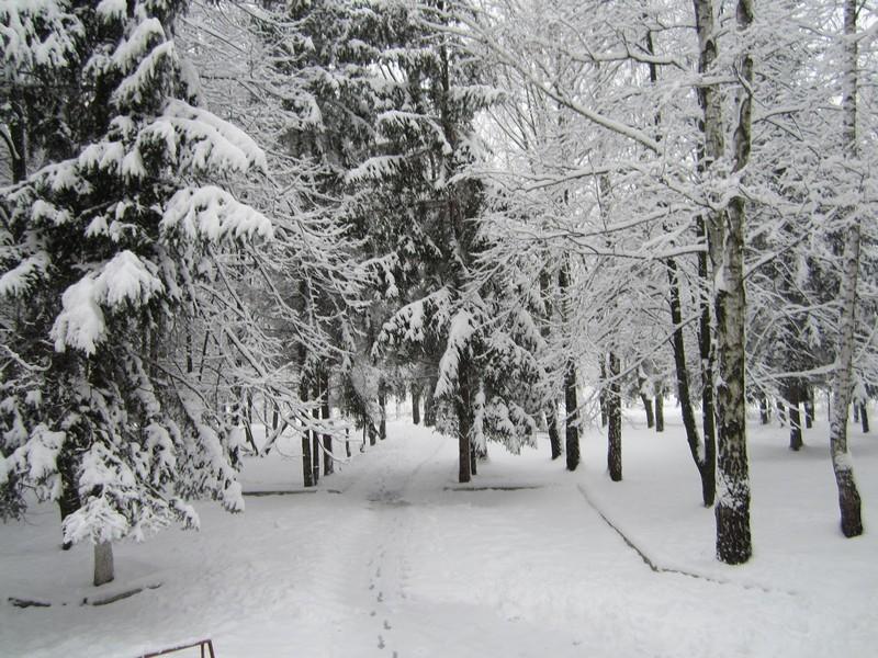 Синоптики попереджають закарпатців про сніг у горах