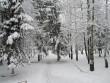 Синоптики попереджають про сніг