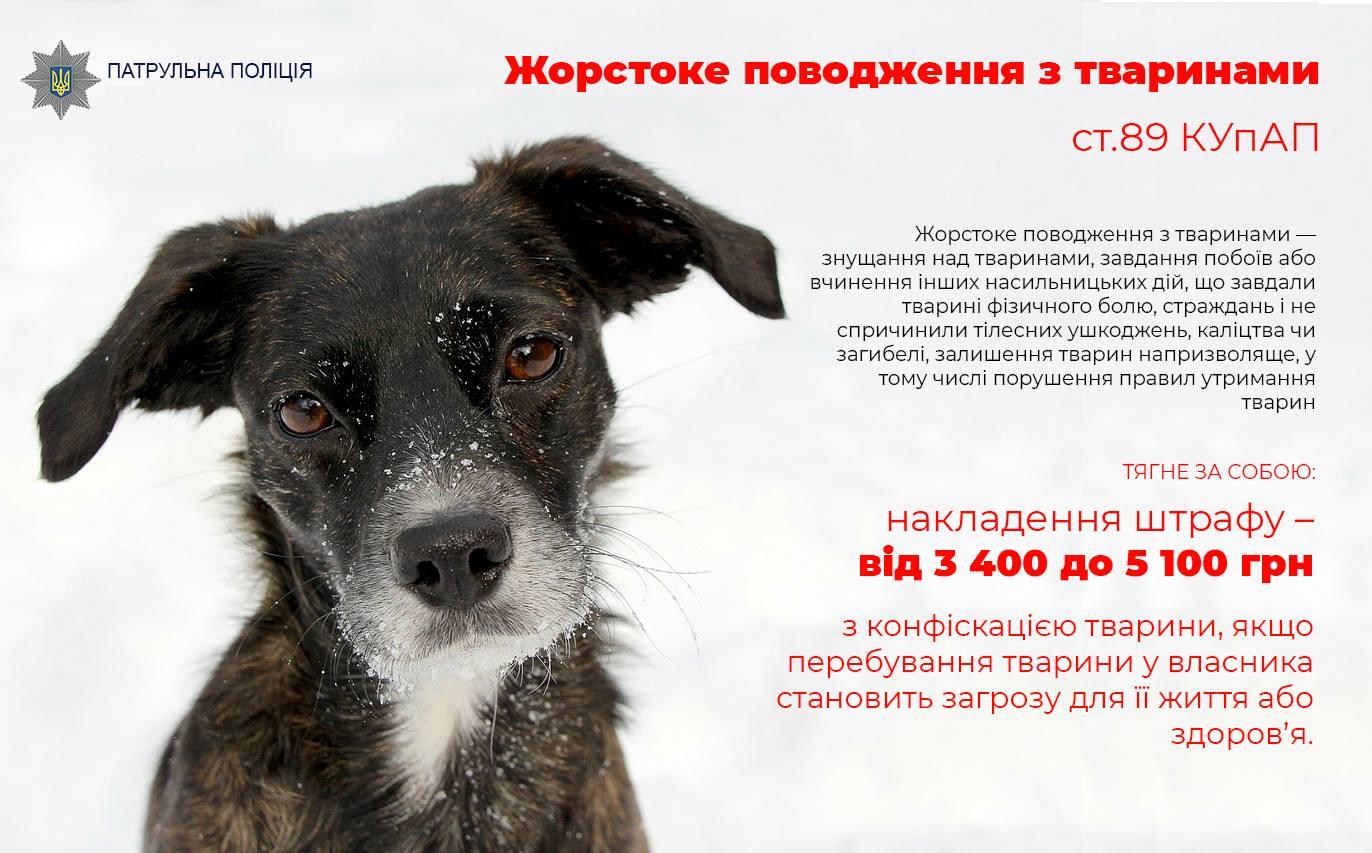 У Мукачеві патрульні склали протокол на чоловіка, який знущався з власної собаки