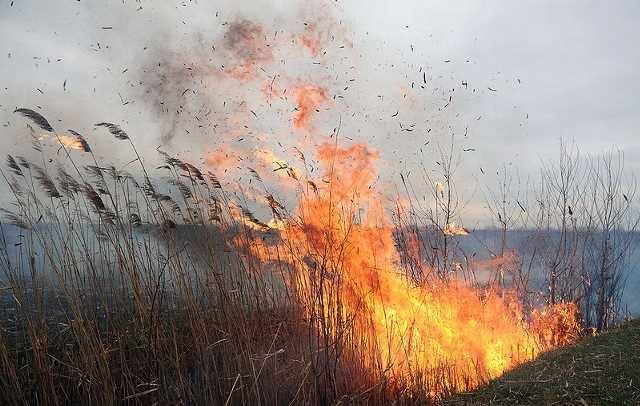 На Закарпатті впродовж вихідних, 16-17 лютого, вигоріло 10 гектарів трави