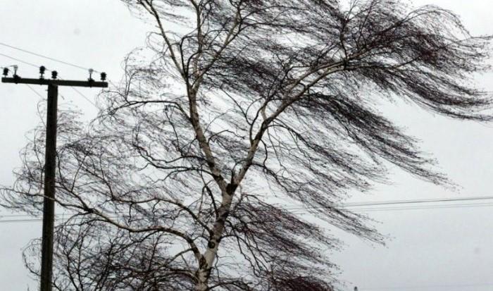 Синоптики попереджають закарпатців про сильний вітер 26-27 лютого