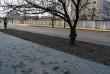 На узбіччі вулиці Заньковецької в Ужгороді висадять алею сакур