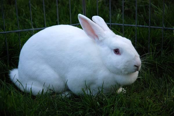 У Тересві чоловік вкрав кроля за 8 тисяч гривень
