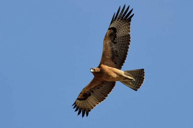 На Міжгірщині функціонує реабілітаційний центр Синевир для диких птахів