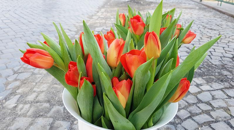 На Закарпатті ціни на квіти зросли на третину