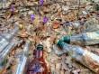 У мережі показали шафранові поляни, які встелені сміттям