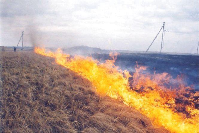 У селі Бедевля, що на Тячівщині, згоріло 3 гектари сухої трави