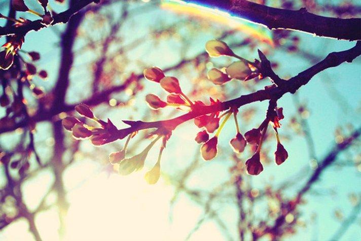 Один із найтепліших днів: синоптики розповіли, якою буде погода у понеділок на Закарпатті