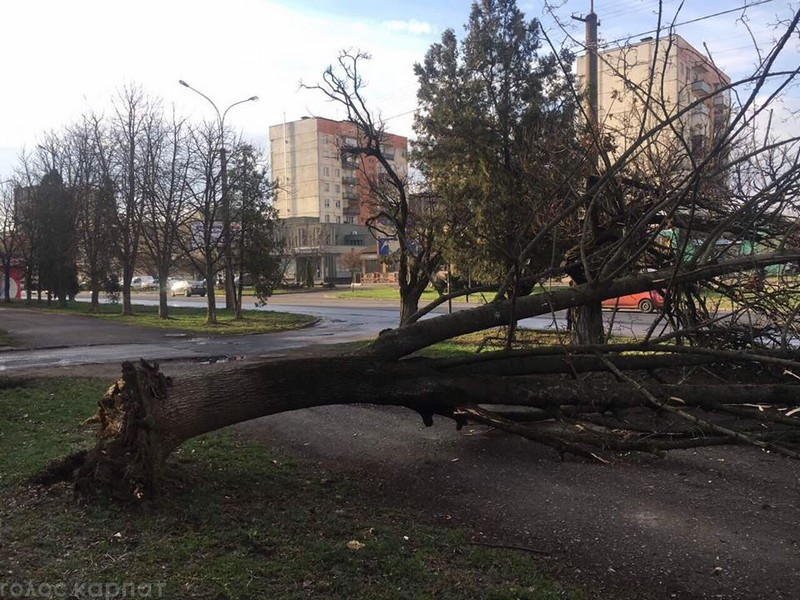 В Ужгороді нічна негода наробила біди – вирвала дерево