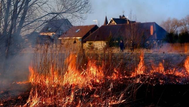 Найбільше в Україні траву спалюють жителі Закарпаття