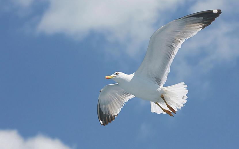 В Ужгороді на річці Уж оселились лебеді, дикі качки та чайки