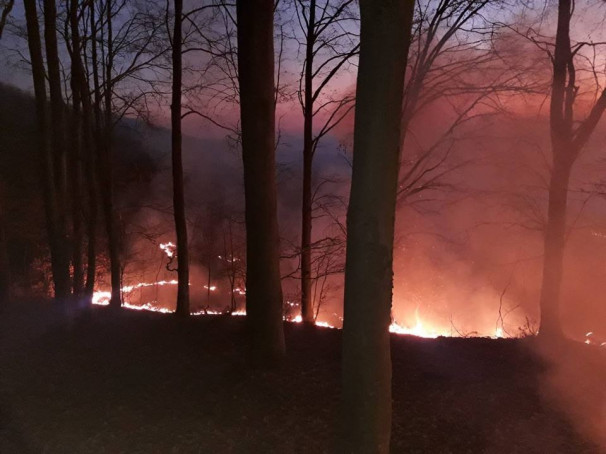 На Виноградівщині горіло майже 5 гектарів поля неподалік лісу