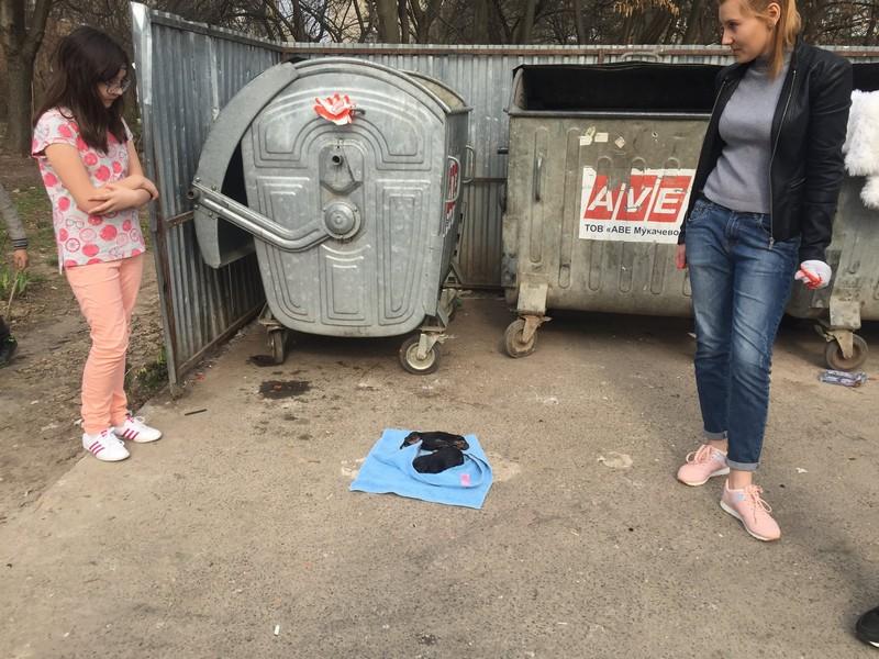 У Мукачеві в мікрорайоні Черьомушки на смітник викинули новонароджених цуценят