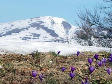 Сніг і весняні квіти: у мережі показали, як зима зустрічає весну