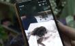 Відрізана голова собаки, а до цього кошеня із відрізаними лапами: у Мукачеві на одному й тому місці виявляють шокуючі знахідки