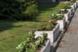 Бегонії, гладіолуси, пеларгонії та півонії: в Ужгороді висаджують сотні квітів