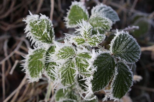 Прогноз погоди на 30 березня: синоптики попереджають закарпатців про заморозки