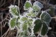 Синоптики попереджають закарпатців про заморозки