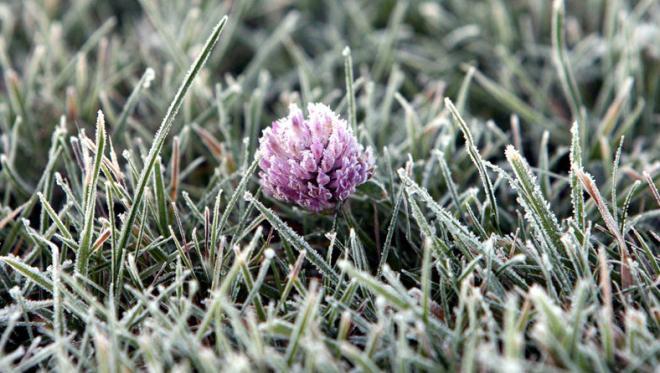 На Закарпаття синоптики прогнозують заморозки 3 квітня