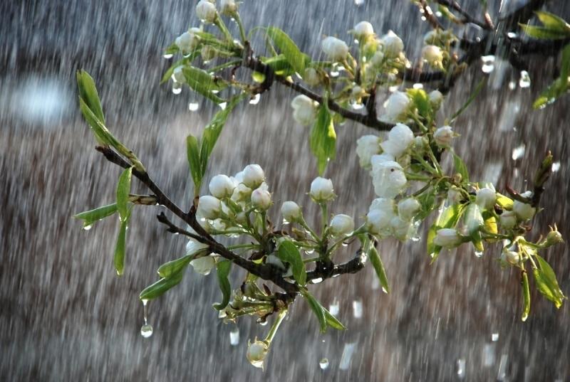Прогноз погоди на другий тиждень квітня на Закарпатті