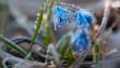 Нічні заморозки та денний максимум у +18 градусів: погода на тиждень у Закарпатті