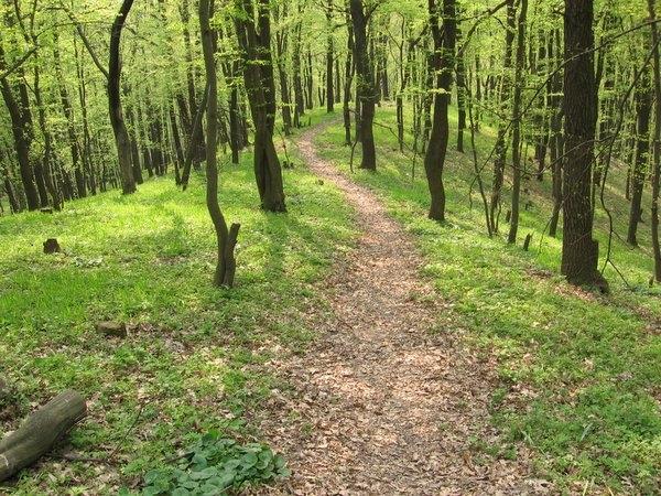 Діти знайшли у лісовому масиві в Ужгороді труп чоловіка