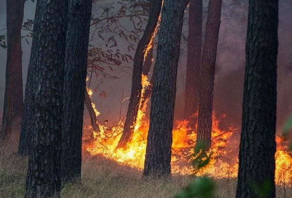 В Ужгороді у лісі знайшли труп: подробиці від рятувальників