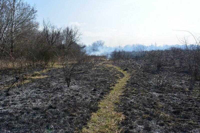 Впродовж доби на Закарпатті вогнеборці гасили 13 пожеж в екосистемах