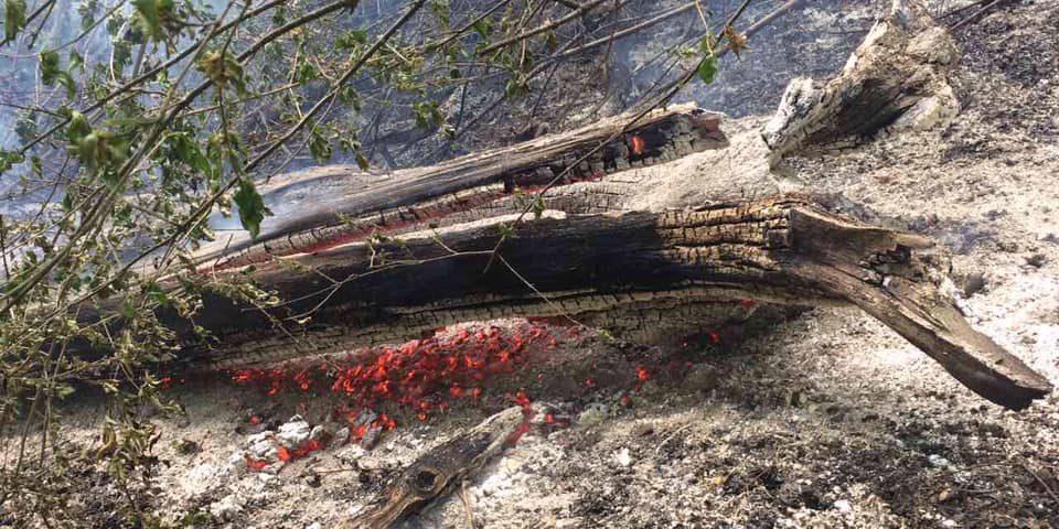 На Закарпатті умисно підпалили ліс