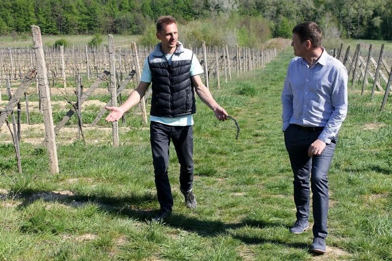 Закарпатець вирощує європейські сорти виногрaду у селі Сюрте, що в Ужгородському районі