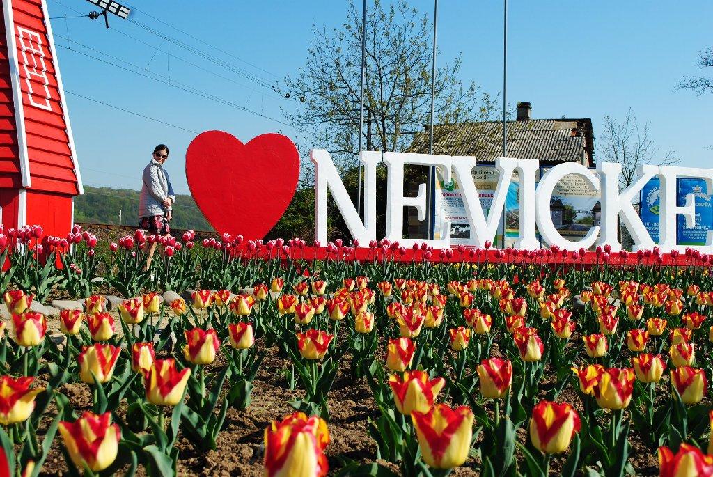 У селі Невицьке висадили 10 тисяч тюльпанів