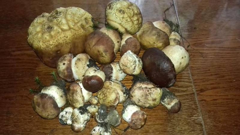 На Закарпатті на Великдень знайшли білі гриби