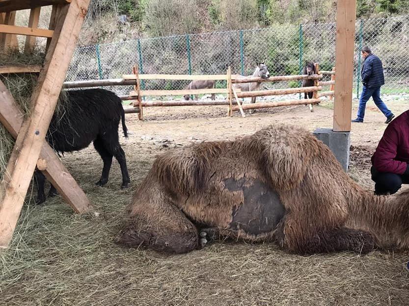 Прокуратура перевіряє факти жорстокого поводження з тваринами в екопарку, що на Міжгірщині